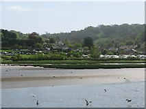 SY2591 : Axmouth across the Axe estuary by Sarah Charlesworth