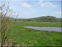 SY2591 : Wetlands of the Axe estuary by Sarah Charlesworth