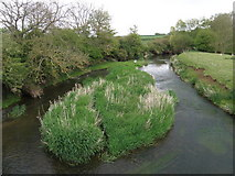 SP9599 : River Welland downstream from Wakerley bridge by Michael Trolove