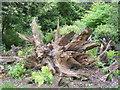 TL8161 : A Splendid Stump by Stuart Shepherd