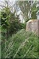 SU5694 : Ditch by the pillbox by Bill Nicholls