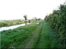 N9931 : Grand Canal near Hazelhatch, Co. Dublin by JP