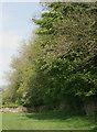 SS8878 : Trees beside footpath to the north east of Merthyr Mawr by eswales