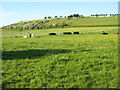 SO9156 : Grazing land at Crowle by Philip Halling