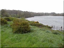 H0811 : North shore of St John's Lough by Oliver Dixon