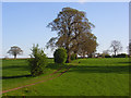 NY6132 : Pasture, Skirwith by Andrew Smith
