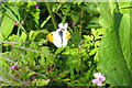 NO3624 : Male Orange-tip [Anthocharis cardamines] by M J Richardson