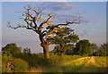 SE7928 : Balkholme Common, near Eastrington by Paul Harrop