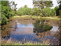 NS7974 : Small Pond on Fannyside Road, Cumbernauld by Stevie Spiers