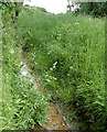 TF7118 : Well-maintained deep ditch west of Gayton by Andy F