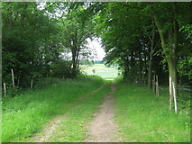 TR0047 : The North Downs Way in Skeats Wood by David Anstiss