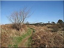 NT6378 : Coastal path, Hedderwick by Richard Webb