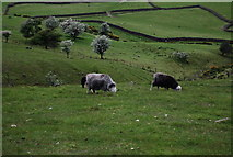 NY1807 : Sheep grazing on the slopes of Wasdale by N Chadwick