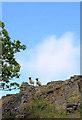 NM8127 : Sheep on the cliff by Bob Jones