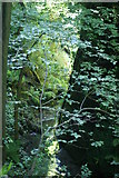 SZ5881 : Shanklin Chine - Gorge by Peter Trimming