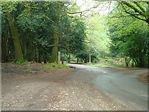 SU2609 : Track near Acres Down, New Forest by Stacey Harris