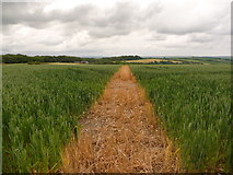 ST6700 : Cerne Abbas: path through field at St. Catherine's Hill by Chris Downer