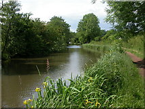 SP0272 : Alvechurch, canal by Mike Faherty