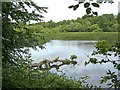 SO8577 : Hurcott Pool seen from Hurcott Wood by P L Chadwick