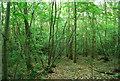 TQ5951 : Woodland, Dene Park by N Chadwick
