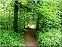 SO5812 : Path into Coverham Inclosure by Jonathan Billinger