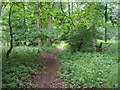 SU7987 : Footpath through woods by Shaun Ferguson