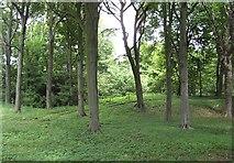 NT0783 : Rocks Plantation by Richard Webb