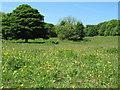 NZ4346 : Hawthorn Dene, County Durham by peter robinson