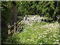 NY9984 : St Oswald's Way at Kirkwhelpington by Oliver Dixon
