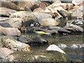 SD6916 : Grey Wagtail by John Tustin