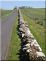 NY6166 : Hadrian's Wall west of Birdoswald by Mike Quinn