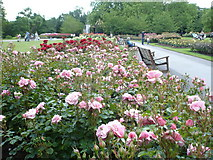 TQ2882 : Rosebeds in Queen Mary's Gardens, Regent's Park by pam fray