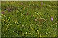 SU7431 : Orchids, Noar Hill by Ian Capper