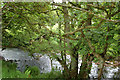 NU1415 : The beck in Cat Heugh by Andy F