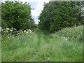 SE8031 : Track to Owsthorpe by Glyn Drury
