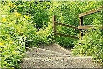 J4681 : Steps, Crawfordsburn Glen by Albert Bridge