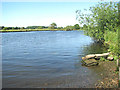 TG3006 : The River Yare and Postwick Marsh beyond by Evelyn Simak