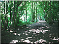 TG2603 : Poringland Wood - a sun-dappled path by Evelyn Simak