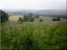SE8569 : Misty view from Fizgig Hill! by Dr Patty McAlpin