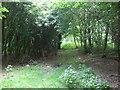 SE8220 : Ride in Stripe Close Plantation by Glyn Drury