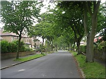 SE1421 : Woodhouse Lane - viewed from Armitage Avenue by Betty Longbottom