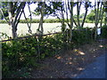 TM3358 : Hedge Laying next to the A12 Main Road by Geographer