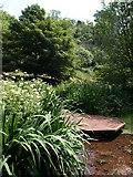 SX8963 : Pond, Cockington valley by Derek Harper