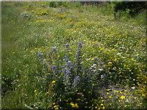 NO8785 : Wildflower garden by Stanley Howe
