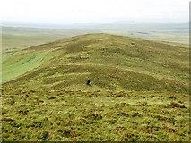 NR3268 : Maol Bun an Uillt by Patrick Mackie