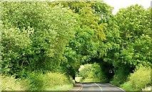 J1744 : The Aughnacloy Road near Banbridge (2) by Albert Bridge
