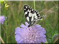 TQ7667 : Marbled White Butterfly on Field Scabious in Great Lines Park, Chatham by David Anstiss