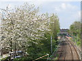 NZ2566 : The Metro lines south of West Jesmond Station by Mike Quinn