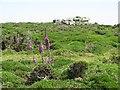 SW4839 : Granite outcrop on Trevalgan Hill by Sarah Charlesworth