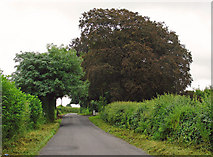 N4845 : Lane near Milltownpass, Co. Westmeath by Dylan Moore